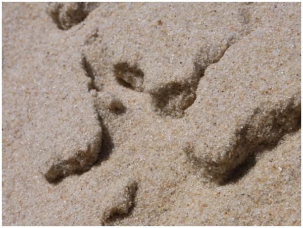 Sand und Meer 12