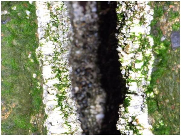 Muscheln und Algen 3